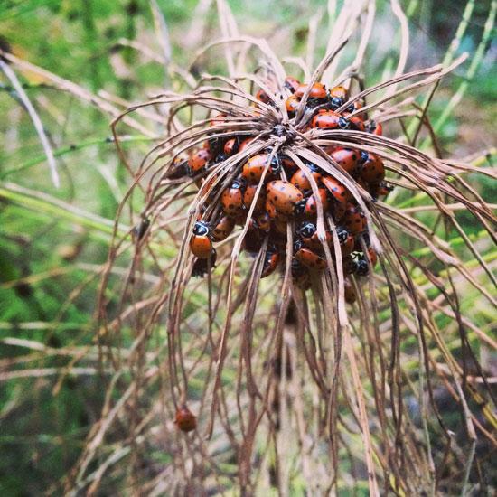 fantasy land ladybugs moons - photo #16