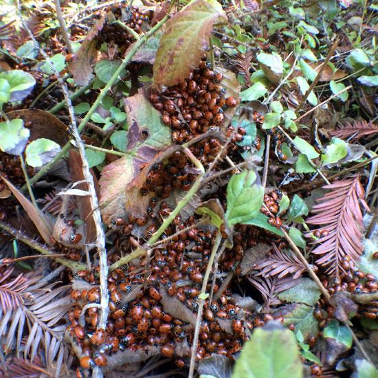 fantasy land ladybugs moons - photo #17